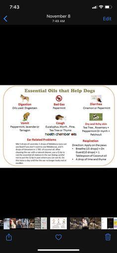 Essential Oils Dogs, Tea Tree, Peppermint, Health, Mint, Health Care, Salud
