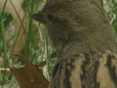 Sparrow contemplating