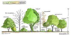 Retrosuburbia: Edible forest garden section