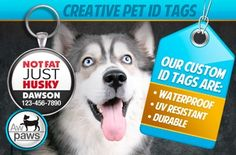 tive & Funny Pet ID Tags from AwPaws.com - Includes Shipping