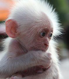 Adorable albino baby
