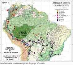 Área de origem do GRUPO M. adusta com a área de diferenciação de M. kunsi no BRASIL CENTRAL . M. kunsi é produto de pedomorfose e a última espécie do Grupo a aparecer ! Diferenciação de uma população de M. adusta.