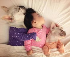 Nap game strong, French Bulldogs and Baby ❤ #buldog