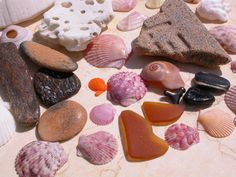 This mornings beach walk on Boca Grande yielded a beachcombers sampler of: sea worn shells with holes, fossilized wood, a fossilized sharks tooth and fish mouth plate, a tile piece, colorful scallop and sunrise tellin shells, a spiral, and yes some amber pieces of sea glass.