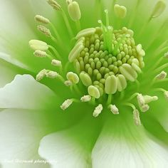 Macro Flower Photography by Paul Helzmink