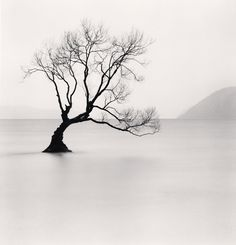 Michael Kenna - Wanaka Lake Tree, Study 1, Otago, New Zealand. 2013