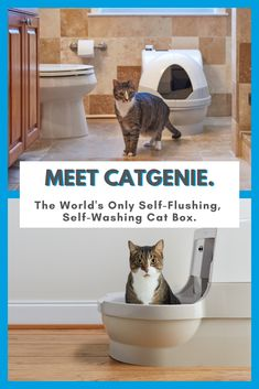 CatGenie flushes away waste and washes itself clean. It's dust free, odor free, and litter free. The environmentally-friendly Cat Genie cat box uses permanent litter granules, so you never have to touch, clean or buy cat litter. Cat Hacks, Cat Enclosure, Cat Room, Animal Projects, Here Kitty Kitty, Crazy Cats, Cool Cats, Pet Care, Animals And Pets
