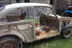 Here's a smart way to upcycle a junkyard car: Turn it into a chicken coop with some wire fencing and hay.