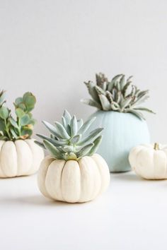Glam up your home for Halloween + the fall with a set of DIY mini pumpkin succulent planters.
