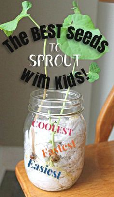 This is great! Find out which seeds sprout fastest, are easiest to grow, and have the coolest cell structures. Awesome garden science for preschoolers and kids! #howweelearn #gardening #vegetablegarden #kidsactivities #sciencefirkids #springactivities #preschoolactivities #getoutside...