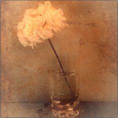 Flower in glass, photoart
