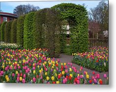 Keukenhof Motley Of Colorful Tulips And Decorative Arches Metal Print by Jenny Rainbow Daffodils, Tulips, Fine Art Prints, Framed Prints, Beautiful Flowers Garden, Arches, Botanical Gardens, Spring Flowers, Fine Art Photography