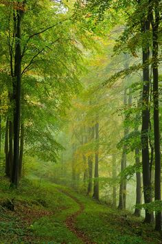 ~Forces of Nature~the path i want to walk with Christian