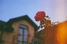Фэд-5 #35mm #film #photography #kodak