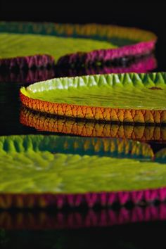 expecttheunexpectedtoday:  expecttheunexpectedtoday -Lily Pads-