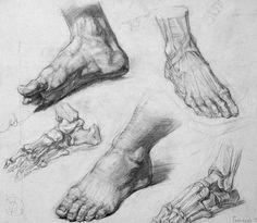 Anatomía Pies