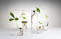 Floating Forest Series planters (with semi-suspended oak tree seeds) by Michael Anastassiades. Yucca, Mobile Chandelier, Turbulence Deco, Oak Tree, Water Garden, Indoor Plants, Indoor Gardening, Potted Plants, Bonsai