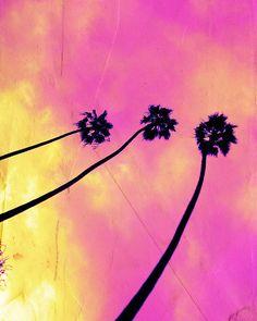 Pretty pink palm trees.
