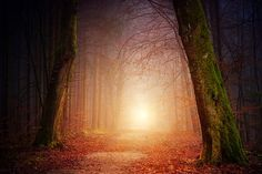 Forest Light photo by Johannes Plenio ( on Unsplash Poster App, Usui Reiki, Big Blue Eyes, Forest Wallpaper, Vash, Negative Emotions, Free Images, Temple, Islam