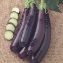 Hansel Hybrid Eggplant - 2008 All-America Winner. The newest development in the 'mini' eggplant craze. Finger-size dark purple fruits are produced in clusters of three to six. Harvest when mini-size at 2 to 3 inches or let them grow to 10 inches - they remain tender with few seeds and no bitterness. Space-saving plants grow less than 3 feet high, but are exceptionally high-yielding.