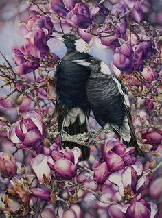 Doodlewash - watercolor painting illustration by Heidi Willis of Magpies in Magnolias Art And Illustration, Art Et Nature, Blog Art, Jackson's Art, Bird Artwork, Watercolor Bird, Australian Artists, Wildlife Art, Botanical Art