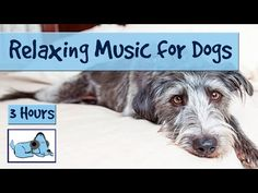 3 Hours of Relaxation Music for Dogs, Calm Them During Firework Displays and Thunderstorms! - YouTube
