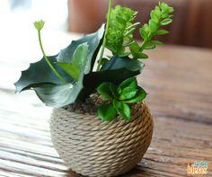 Sua planta está morrendo? Nós fizemos uma lista com 5 dicas que podem salvar a sua! Veja: ow.ly/5iO6301U