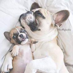 French Bulldog Momma and Puppy❤️❤️❤️❤️❤️❤️