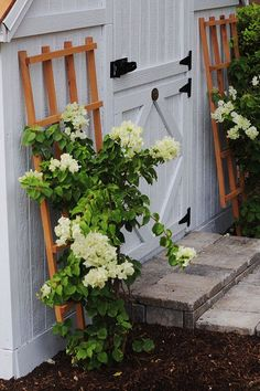 Love the white bougainvillea growing on trellis on our new playhouse! (Color is 'White Lie' by @BehrPaint #Marquee)