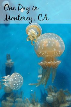 A day in Monterey, CA with kids -- I'll tell you where to eat, what to do, and where we found the cutest sea otters ever!