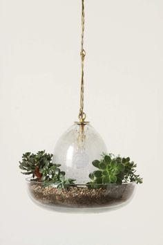 Terrarium Pendant Lamp - cute idea.  Link is to Anthropologie.  Not sure the plants would survive the heat from an actual light bulb, but who knows!?
