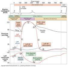 Wiggers diagram nursing infoeducation pinterest diagram wiggers diagram ccuart Images