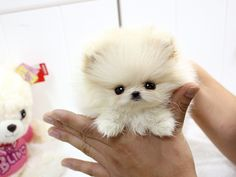 very cute! Want one!!!!