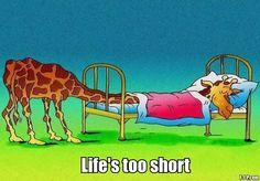 Funny Giraffe Life Too Short Cartoon Meme Image - Sleeping in small bed Funny Giraffe Pictures, Funny Pictures, Funny Pics, It's Funny, Good Night Funny, Sleepy, Giraffe Art, Giraffe Quotes, Cartoon Giraffe