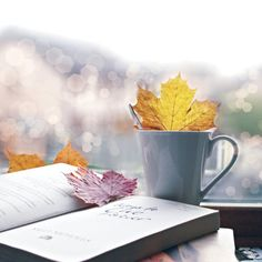 """""""Fall leaves, a good book, and hot tea. What more could autumn-obsessed-bibliophile ask for?""""-Andrea Lee, original pinner."""