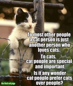 Cats don't judge you. But they love you unconditionally for who you are!