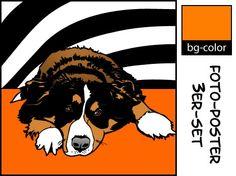 Berner Sennenhund Hund POP ART Bilder Retro Poster Foto Bild Porträt Hund Fotos | eBay