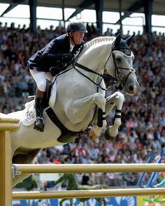 Al Kaheel Cavalor Cumano.. I LOVE this amazingly gorgeous stallion- one of my favorites <3