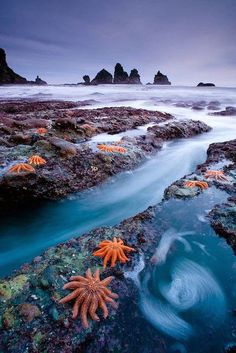 Starfish Colony - West Coast of New Zealand