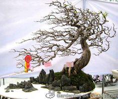 「演奏できる盆栽」や「世界一小さな盆栽」など、極端に個性が爆発している魅力的な盆栽15選 - GIGAZINE