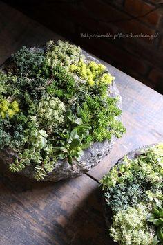 フローラのガーデニング・園芸作業日記-寄せ植え セダム 多肉植物