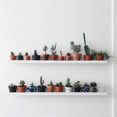 Indoor Plants Beginning with R . Indoor Plants Beginning with R . Indoor Hanging Plant without Drilling A Heavy Duty Tension Deco Cactus, Cactus Decor, Cactus Art, Plant Decor, Deco Nature, Room Goals, Deco Design, Design Trends, Aesthetic Rooms