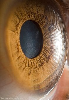 The fantastic macro photos of the human eye by Suren Manvelyan.Incredible close-up photos of Your beautiful eyes Photos Of Eyes, Close Up Photos, Cool Photos, Amazing Photos, Funny Photos, Image Of Human Eye, Gif Kunst, Photo Macro, Realistic Eye Drawing