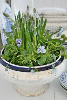 Indoor Garden for Spring Centerpiece