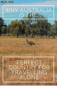 Why Australia is the Perfect Country For Solo Travel {Big World Small Pockets}