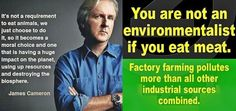 """🍓JAMES CAMERON🍓 """"You can't be an environmentalist, you can't be an ocean steward.[if you're] not eating a plant-based diet. Animal Agriculture, Factory Farming, James Cameron, Environmentalist, Celebration Quotes, Vegan Lifestyle, Plant Based Diet, Going Vegan, Food For Thought"""