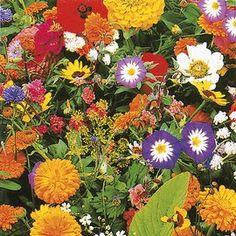 Blumengarten, 4,95€