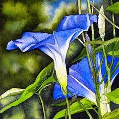"""""""I like the juicy stem of grass that grows within the coarser leaf folded round, and the butter-yellow glow in the narrow flute from which the morning glory opens blue and cool on a hot morning.""""  ~ Denis Levertov,last stanza of """"Pleasures"""" fromCollected Earlier Poems  Painting:Brenda Jiral,Morning Glory,n.d.  #nature #flowers #bohemian"""