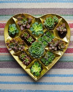 Upcycled Valentine's Day heart-shaped candy box turned succulent planter from Farmhouse38.com