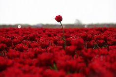BlogZoom: Love, just it